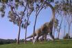 Brontosaur